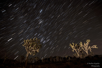 Joshua Tree After Dark