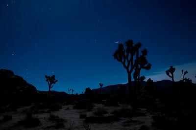 Joshua Tree, After Dark